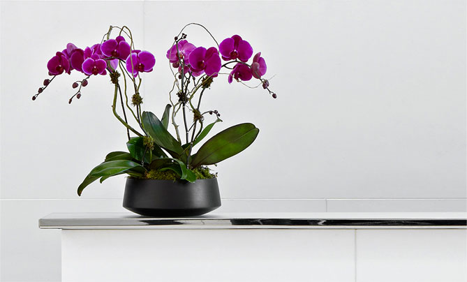 Subscription Floral for Residential Buildings