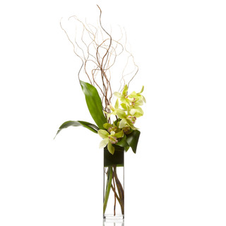 Simple Cymbidium