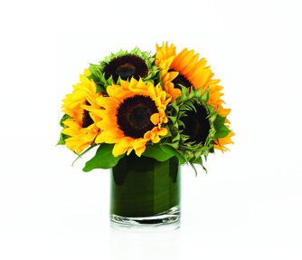 Sunflower Cylinder
