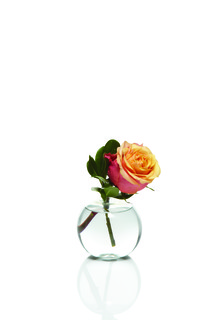 Rose Bud Vase Bundle